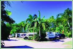 Tropical Hibiscus Caravan Park - Accommodation Daintree