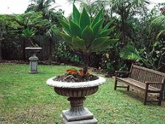Bangalow Retreat - Accommodation Daintree