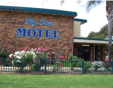 Fig Tree Motel - Accommodation Daintree