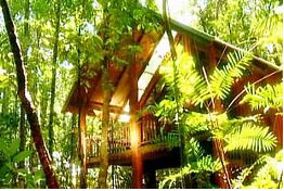 The Canopy Treehouses - Accommodation Daintree