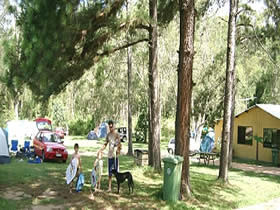 Glasshouse Mountains Holiday Village - Accommodation Daintree