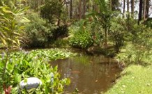 Tallowood Ridge B and B - Accommodation Daintree