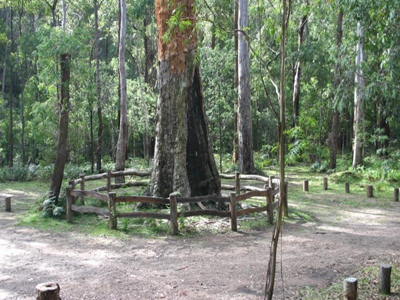 Six Mile Creek campground - Accommodation Daintree