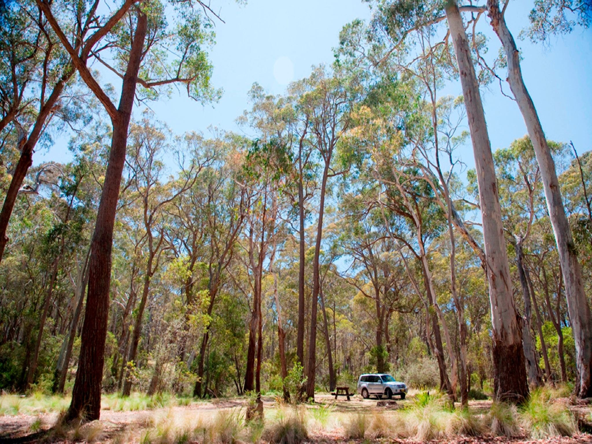 Coolah Tops National Park Camping - Accommodation Daintree