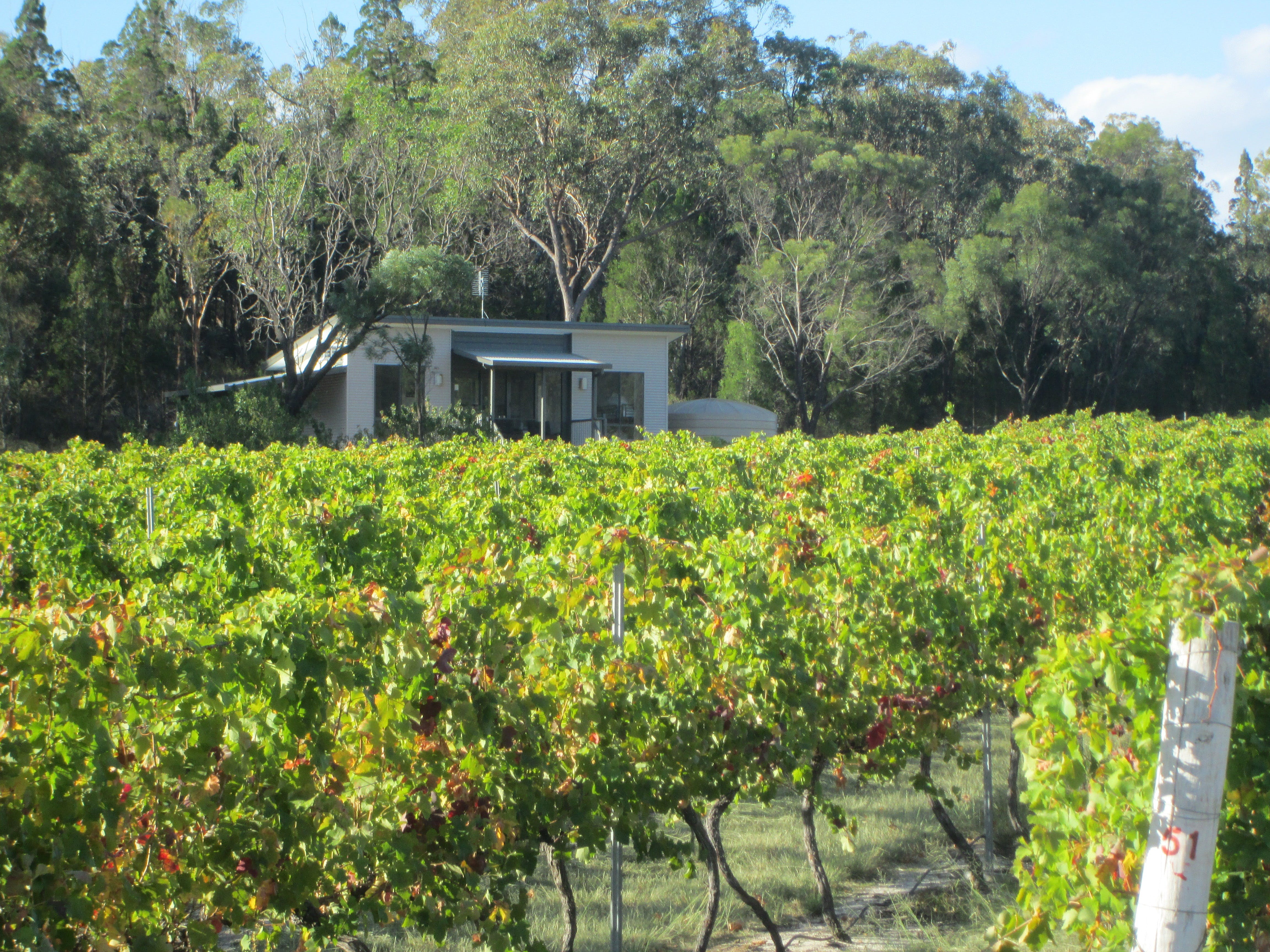 Just Red Wines Vineyard Cabins - Accommodation Daintree