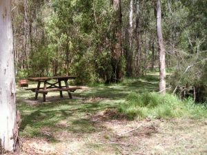 Mulloon Creek campground - Accommodation Daintree