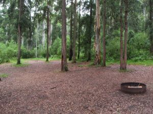 Murphys Glen campground - Accommodation Daintree