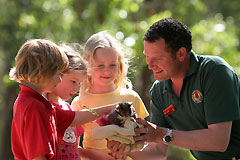 Cleland Wildlife Park - Accommodation Daintree