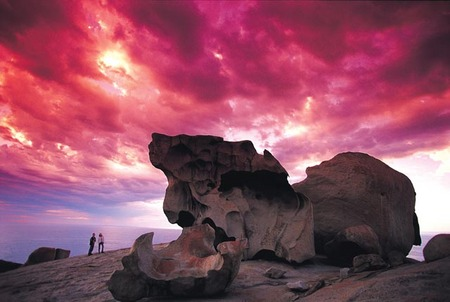 Kangaroo Island Adventure Tour 2 day/1 night - Accommodation Daintree