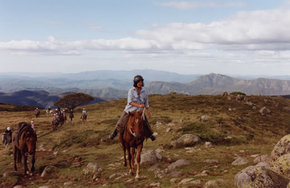 High Country Horses - Accommodation Daintree