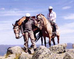 High Country Horses