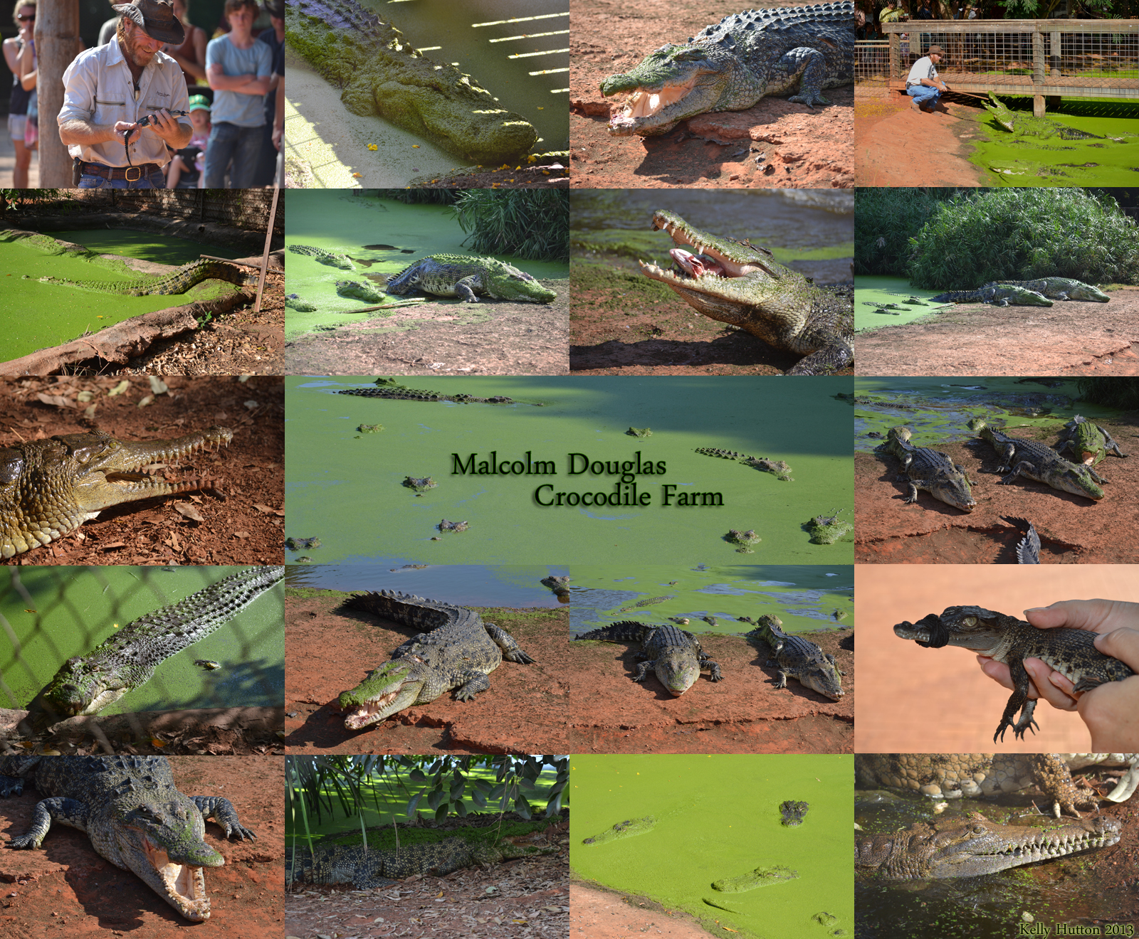 The Malcolm Douglas Crocodile Park - Accommodation Daintree
