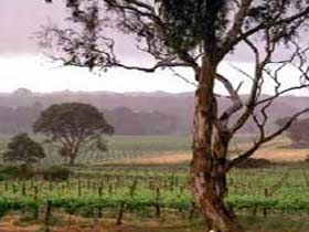 Yangarra Estate Vineyard - Accommodation Daintree