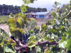Zimmermann Wine - Accommodation Daintree