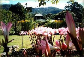 Blueberry Cottage Open Gardens - Accommodation Daintree