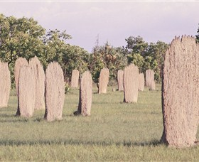 Magnetic Termite Mounds - Accommodation Daintree