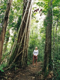 Wet Tropics - Accommodation Daintree