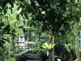 Flecker Botanic Gardens - Accommodation Daintree