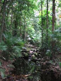 Mossman Gorge Rainforest Circuit Track Daintree National Park - Accommodation Daintree