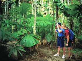Mount Sorrow Ridge Trail Daintree National Park - Accommodation Daintree