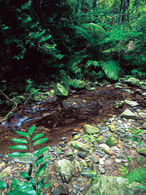 Wompoo Walk - Accommodation Daintree