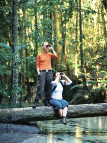 Birdwatching on the Fraser Coast - Accommodation Daintree