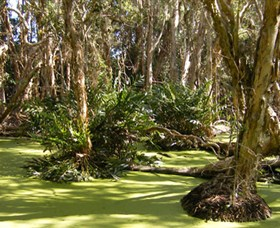 Arkarra Lagoons and Tea Gardens - Accommodation Daintree