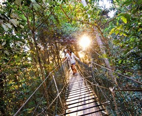 Tree Top Walkway
