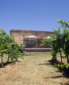 Shantell Vineyard