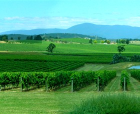 Acacia Ridge Vineyard - Accommodation Daintree