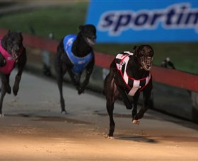 Dapto Dogs - Accommodation Daintree