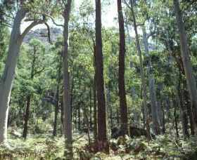 Cathedral Range State Park - Accommodation Daintree