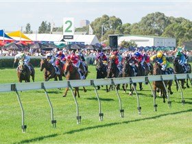 Morphettville Racecourse - Accommodation Daintree