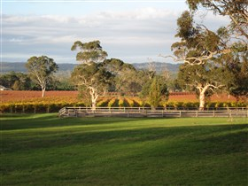Top Note Vineyard - Accommodation Daintree