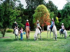 Limestone Coast Horseriding - Accommodation Daintree