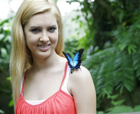 Australian Butterfly Sanctuary - Accommodation Daintree