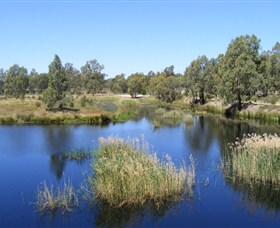 Narrandera Wetlands