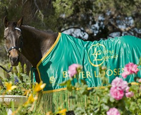 Living Legends: The International Home of Rest for Champion Horses