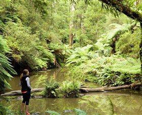 Morwell National Park - Accommodation Daintree