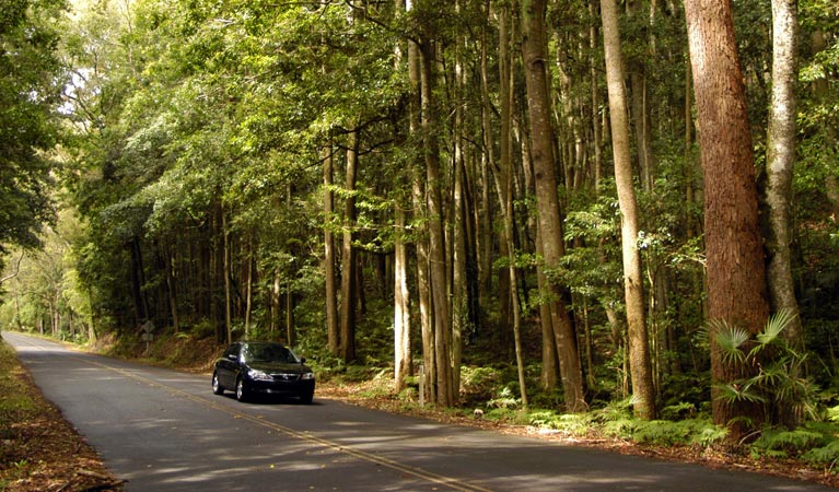 Greater Blue Mountains drive - Accommodation Daintree