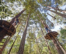 TreeTop Adventure Park Central Coast - Accommodation Daintree