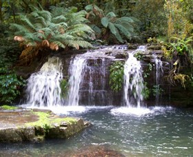 Barrington Tops National Park Walks - Accommodation Daintree