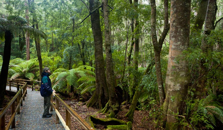 Monga National Park - Accommodation Daintree