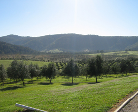 Hastings Valley Olives - Accommodation Daintree