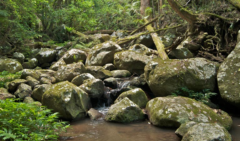 Booyong walking track - Accommodation Daintree
