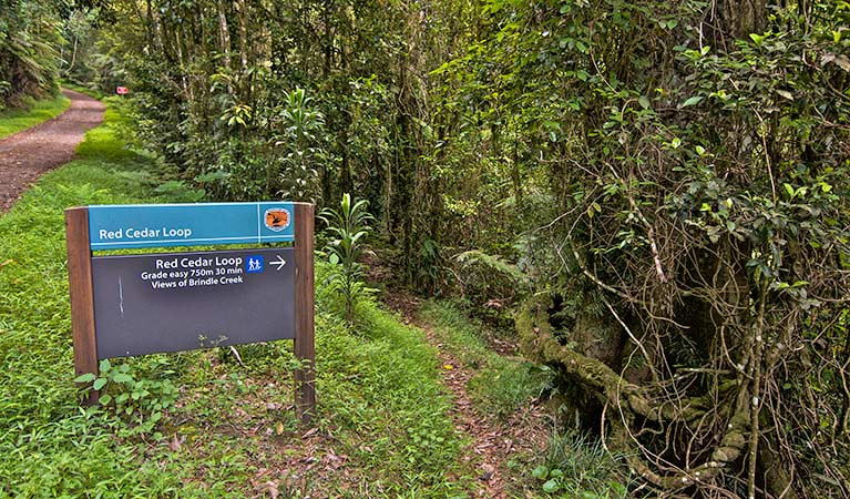 Red Cedar loop - Accommodation Daintree