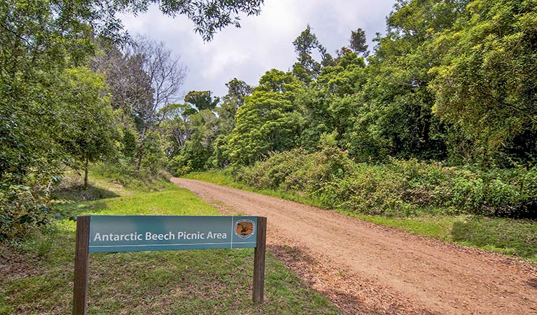 Antarctic Beech picnic area - Accommodation Daintree
