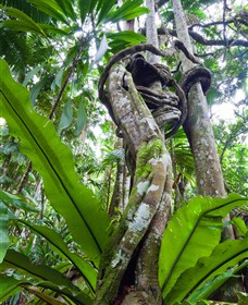 Tamborine Rainforest Skywalk - Accommodation Daintree