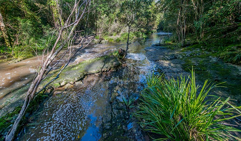 Dawson River walking track - Accommodation Daintree