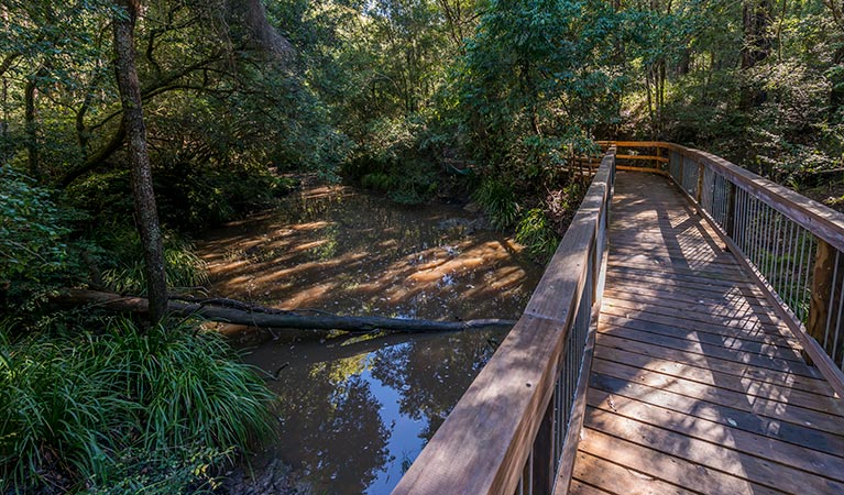 Ms Kellys walking track - Accommodation Daintree